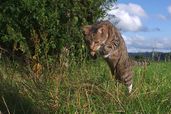 The Hunting Cat