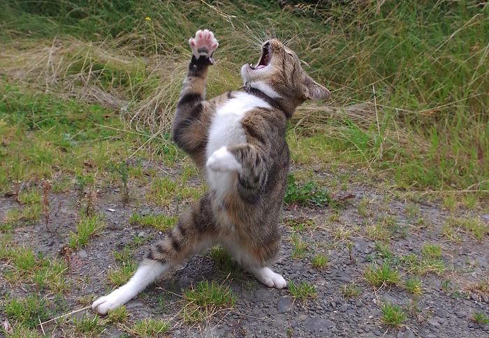 The Singing Cat