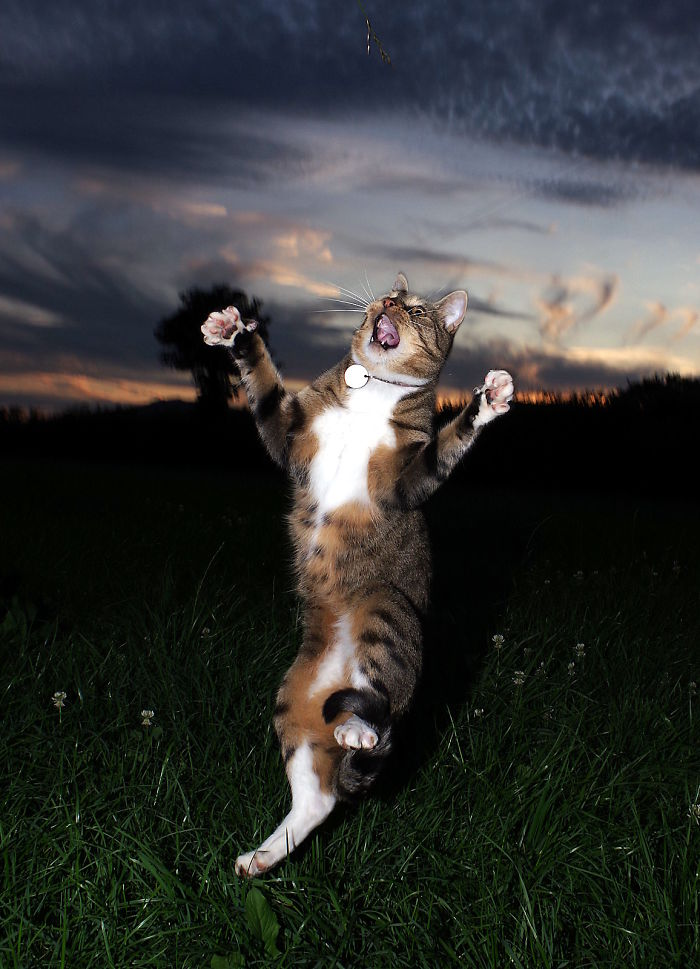 The Rave Cat