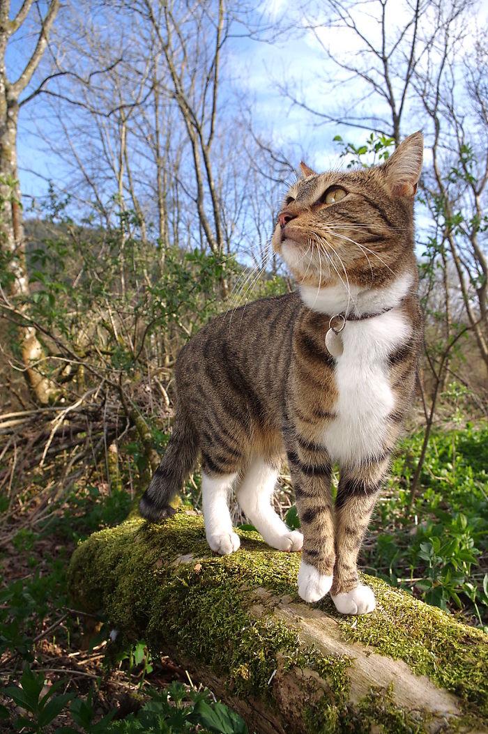 The Woodland Cat