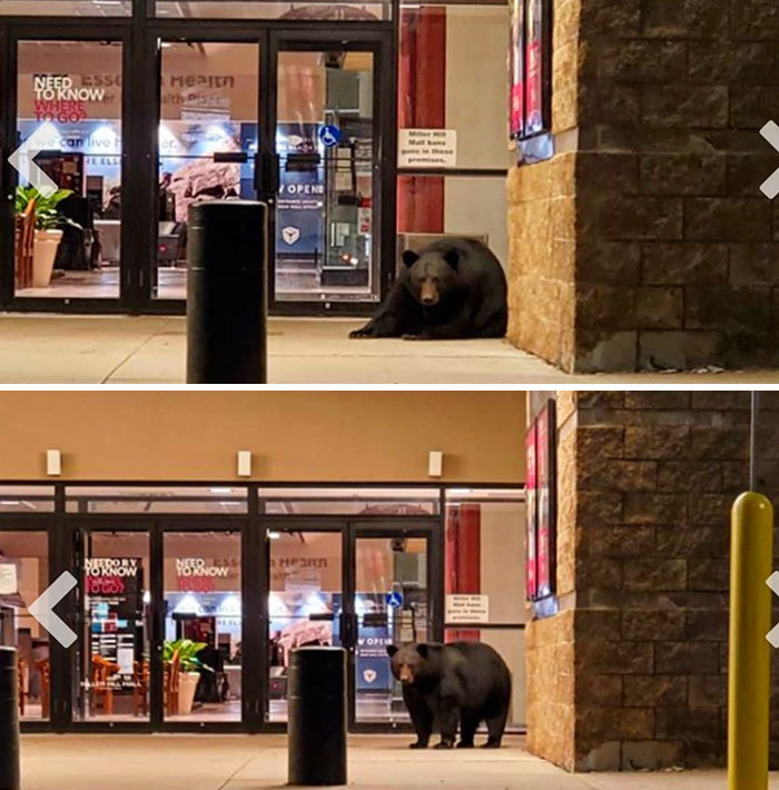 Duluth's Mall Is So Empty That A Bear Decided It Was A Good Napping Spot