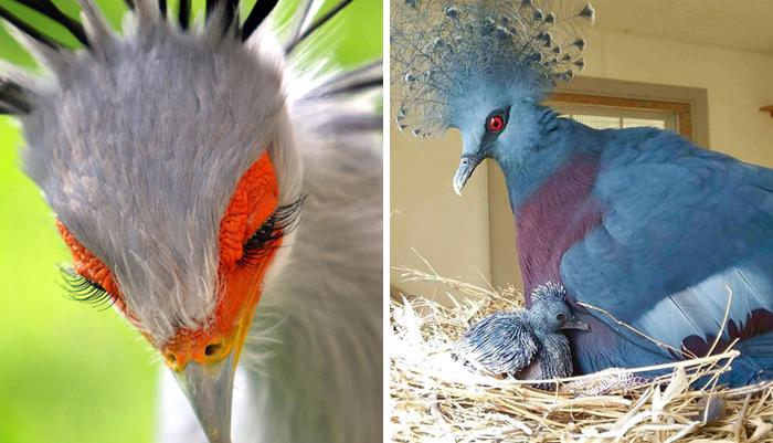 30 Aves extraordinariamente hermosas de las que quizá no hayas oído hablar