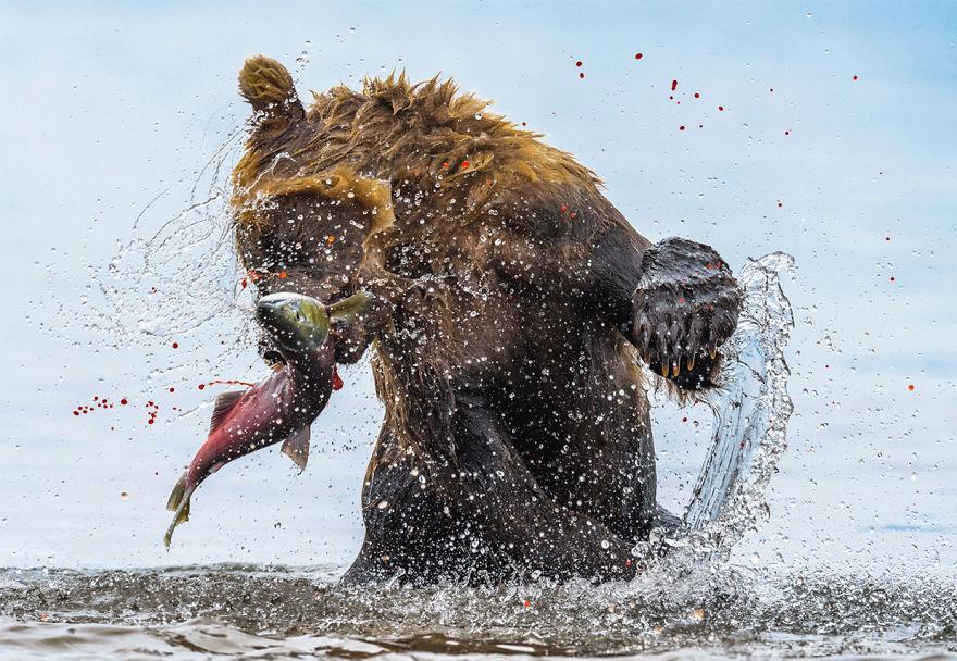 Terrestrial Wildlife, Finalist: 'Bear-Spoilt Eggs' By Jon Langeland
