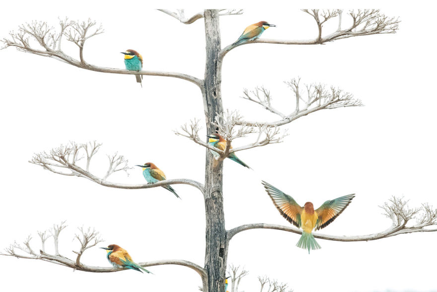 Winged Life, Finalist: 'The Bee Eaters And The Agave Flower' By Salvador Colvée Nebot