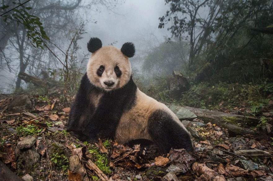 Terrestrial Wildlife, Finalist, Yeye In The Mist By Ami Vitale