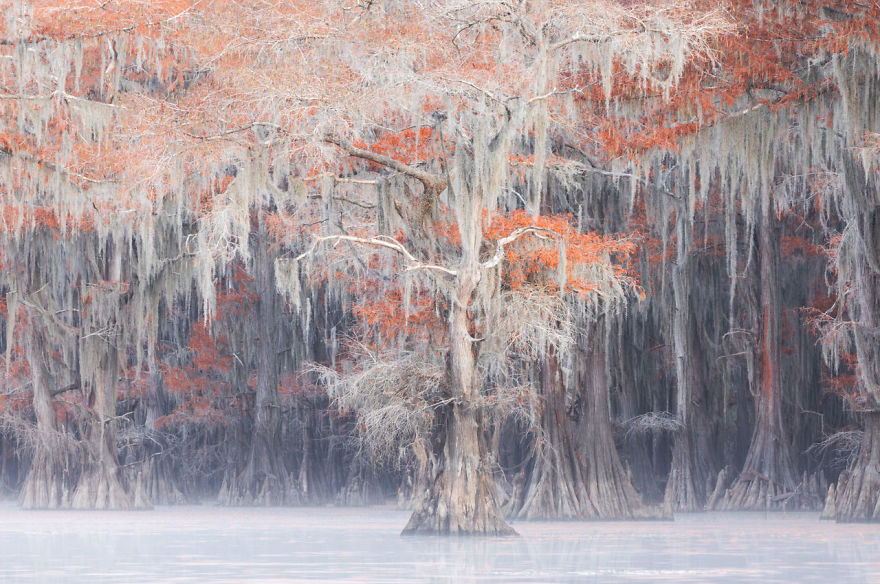Landscapes, Waterscapes, And Flora, Finalist: 'Caddo' By Mauro Battistelli
