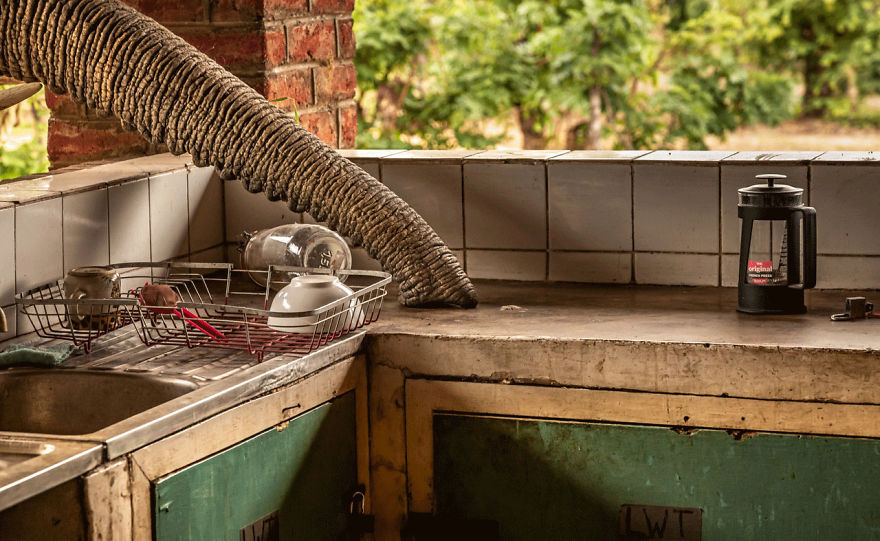 Human/Nature, Finalist: 'The Kitchen Elephant' By Gunther De Bruyne