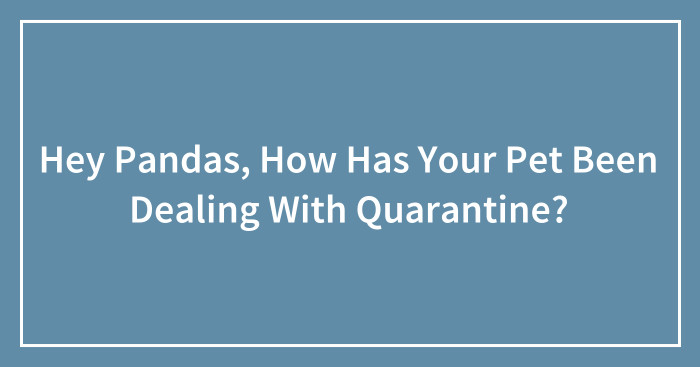 Hey Pandas, How Has Your Pet Been Dealing With Quarantine? (Ended)