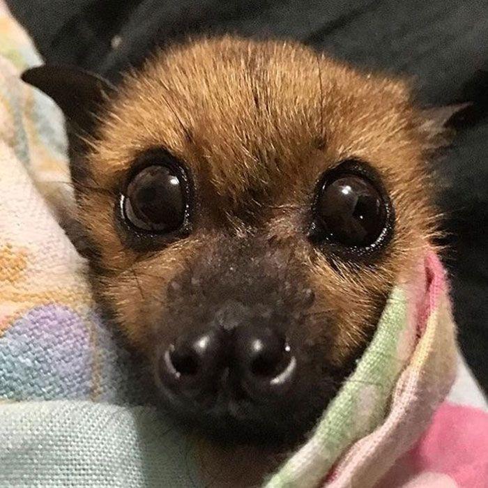 Cute-Adorable-Bats