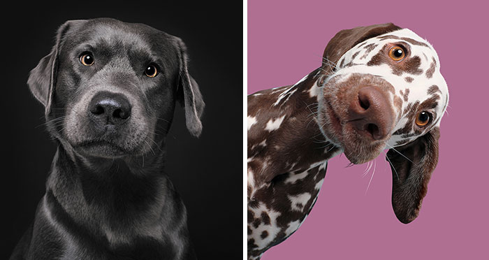 I Photographed These 20 Adorable Dogs And They're Checking Up On How You're Doing
