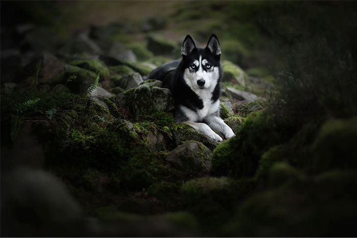 I Combined My Two Favorite Things, Dogs And Nature, To Create These Magical Photos (49 Pics)