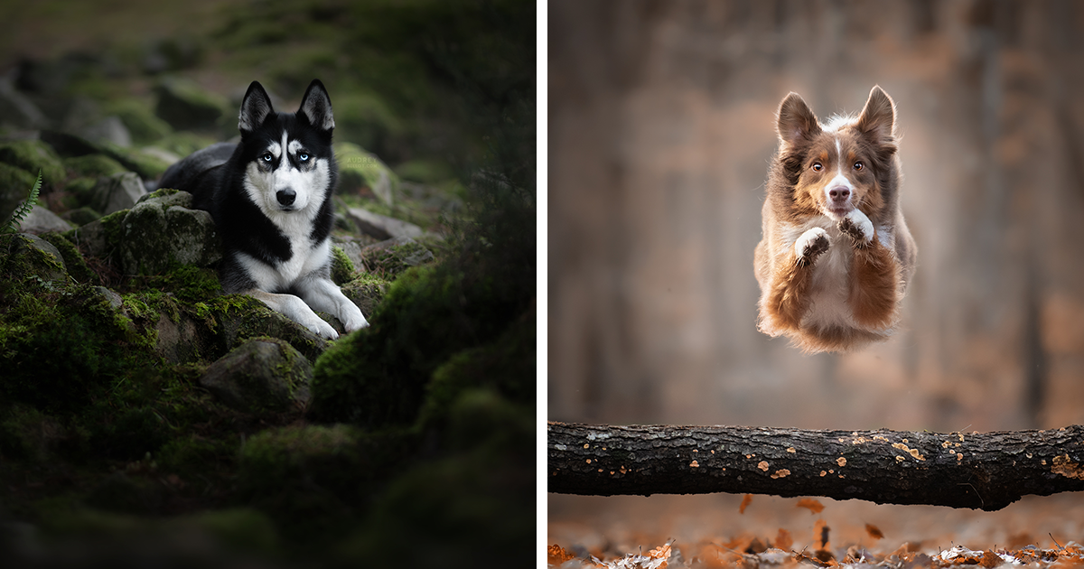 Dog Portraits I Captured In Forests And Other Magical Places