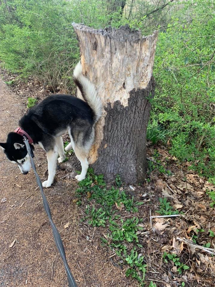 Guy Asks If Other Dogs Poop In Weird Positions Like His Pooch Does, Receives 35 Pics That Answer His Question
