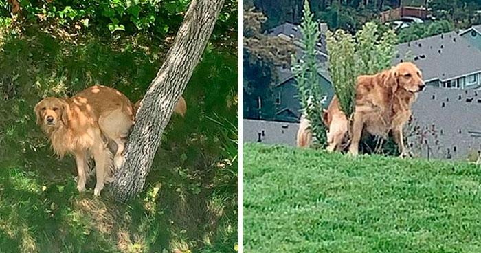Este hombre preguntó si otros perros también hacen caca en posturas extrañas como el suyo, y recibió 35 fotos como respuesta