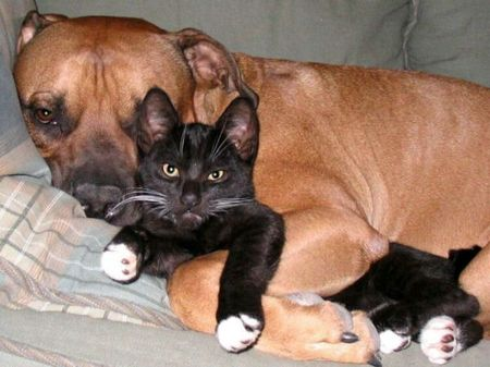 dogs-and-cats14-5ec14cddd9228.jpg