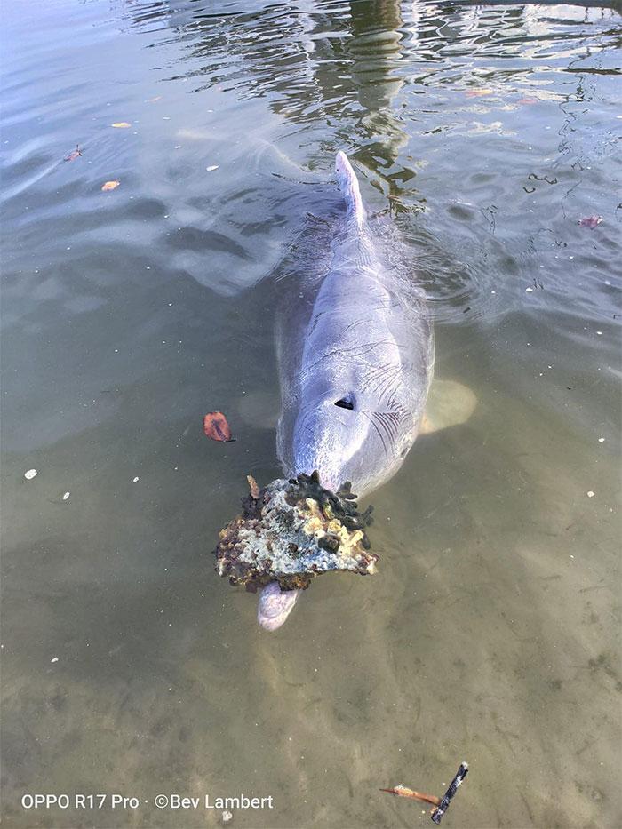 Este delfín lleva regalos del océano a los pescadores todos los días para recibir comida a cambio » Intriper.