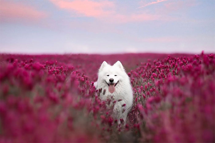 I Capture Magical Photographs Of My Fluffy Dog In Nature (29 Pics)