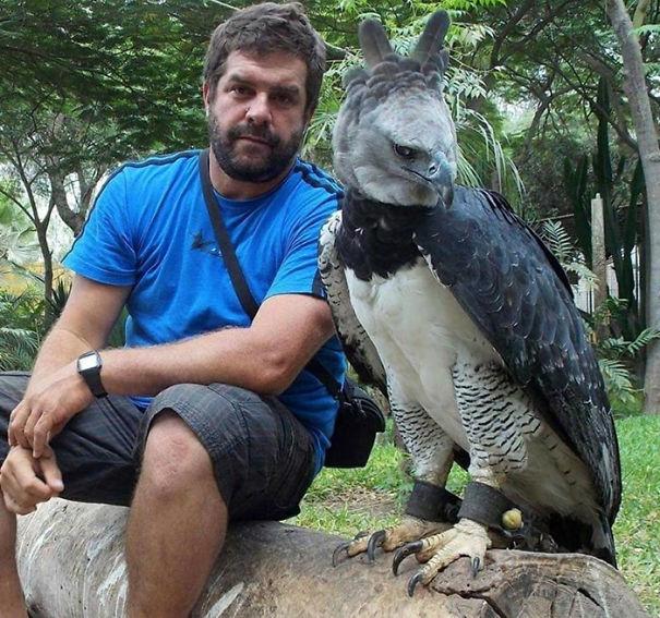 e1vug-harpy-eagle-4.jpg