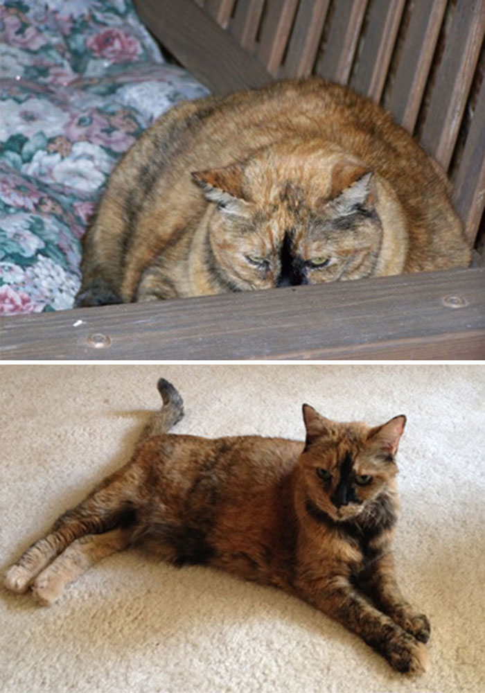 My Cat Lost Half Her Weight Over 12 Years
