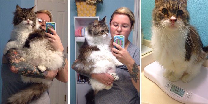 Before And After: One Of Our 14-Year-Old Cats, Lunchbox, Now Weighs Half Of The Weight She Was When She Came To Our Sanctuary