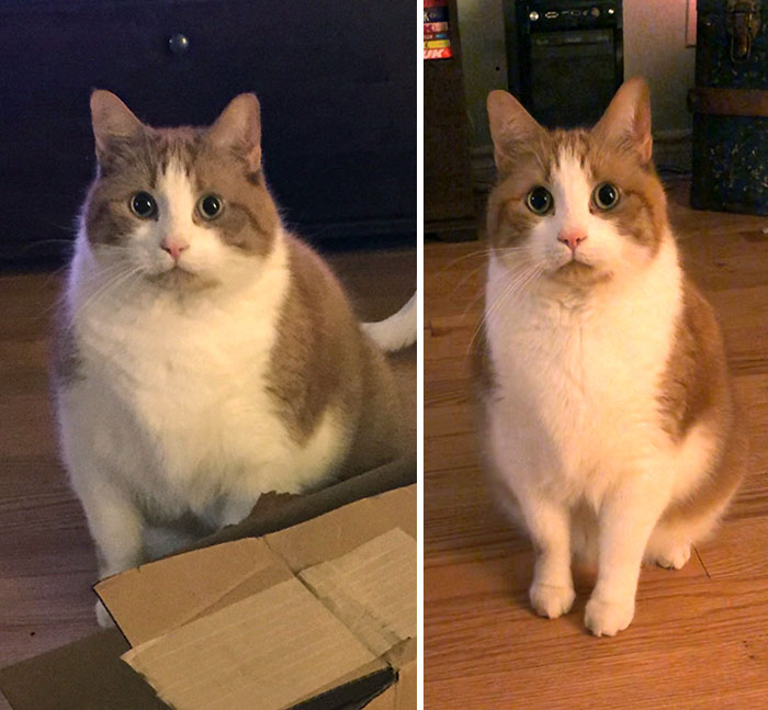 Mister Weez Was Always My Big Chonk. After A Year Of Diet And Exercise, He's Now My Small/Medium Chonk