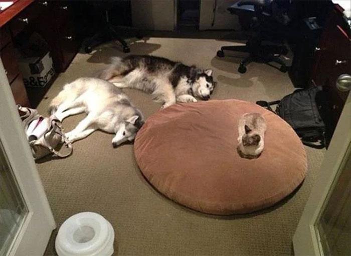 So Tonight We Have To Sleep On Floor