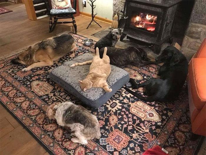 40 Gatos malvados que dominaron a los perros y les robaron la cama