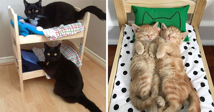 IKEA Sells Mini Beds For Children's Toys, People Buy Them For Their Cats (30 Pics)
