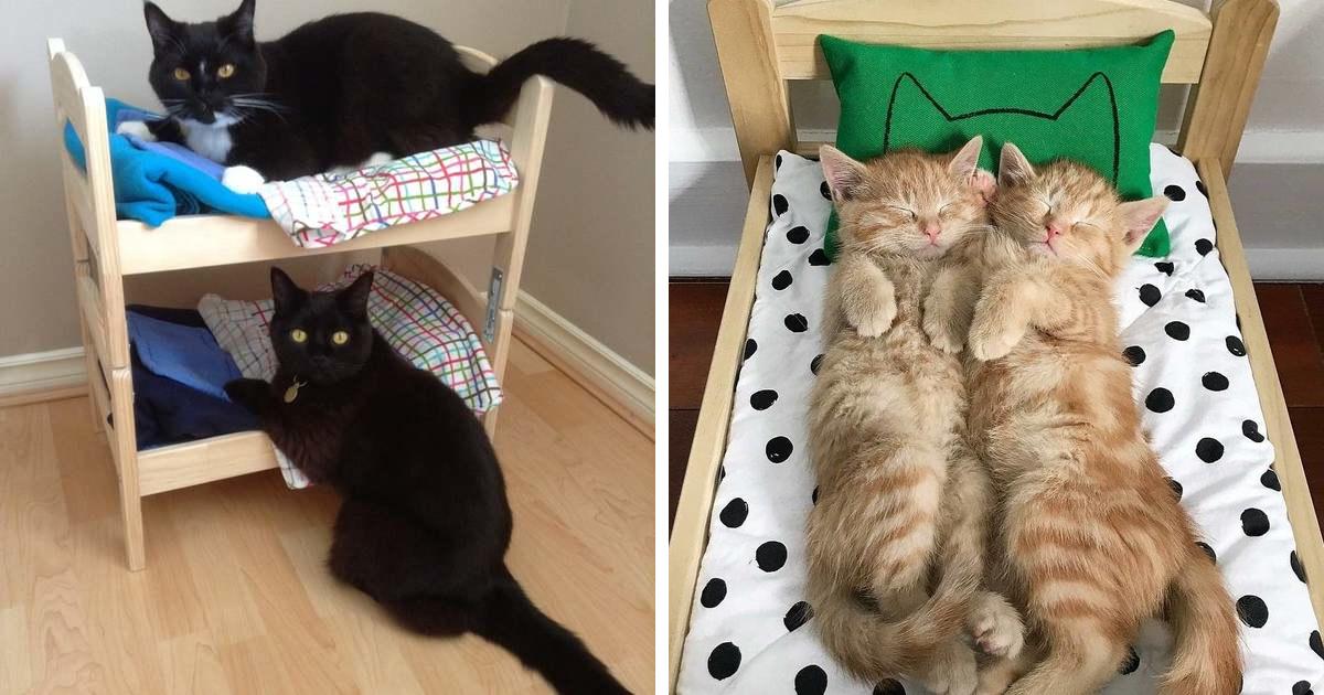 Flor de la ciudad comprar Vatio  IKEA vende camitas de juguete para las muñecas, y la gente las compra para  sus gatos (30 fotos) | Bored Panda