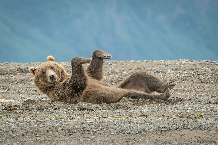 """Doing The Sand Dance."" Brown Bear, Alaska, USA"