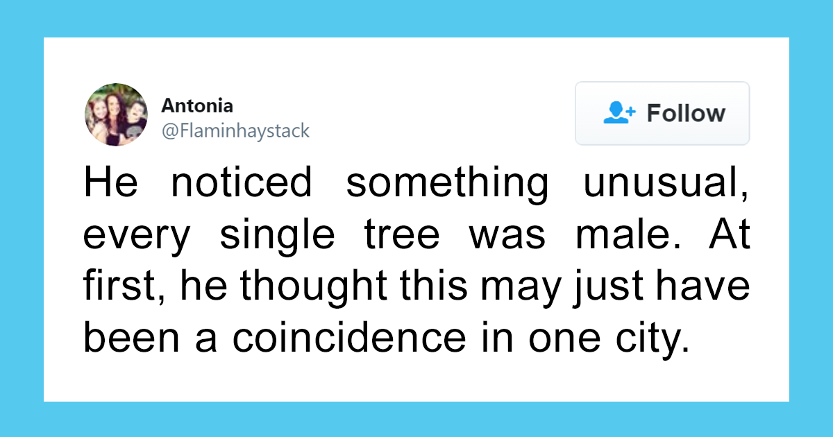 """Scientist Discovers That """"Tree Sexism"""" Might Be A Major Reason Behind Many Spring Allergies (Updated)"""