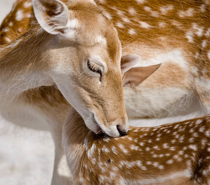 I Photograph The Loving Bond Between Animal Moms And Their Babies (34 Pics)
