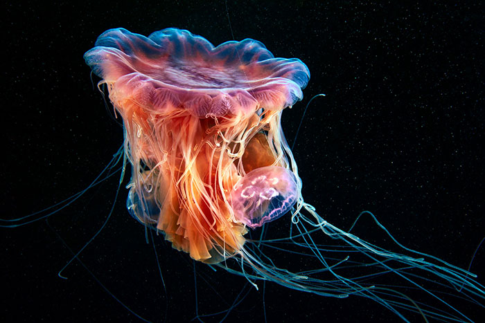 Out-Of-This-World-Underwater-Creatures-Alexander-Semenov