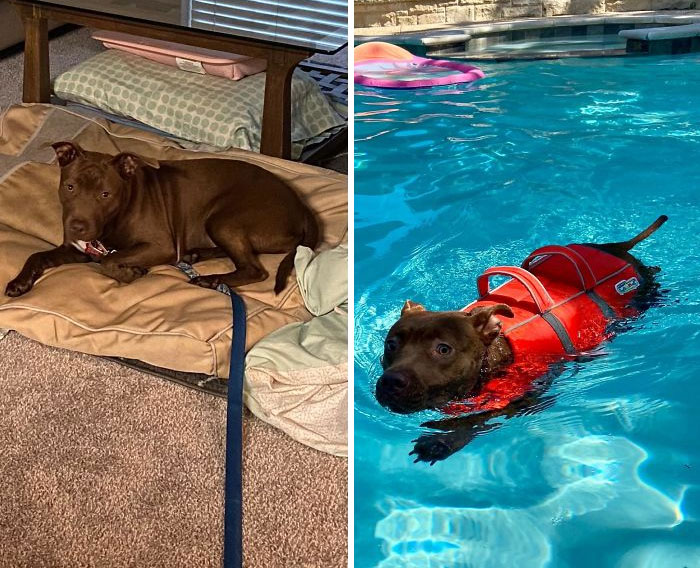 The Shelter Sends Us The Dogs Nobody Else Can Handle To Foster. We Took In Our Foster Tulip A Month Ago, Who Was Code Red For Being Terrified Of People And Biting. She Was Also Terrified Of The Leash, So It Had To Stay On. We Officially Adopted Her On Tuesday And Celebrated By Learning How To Swim!