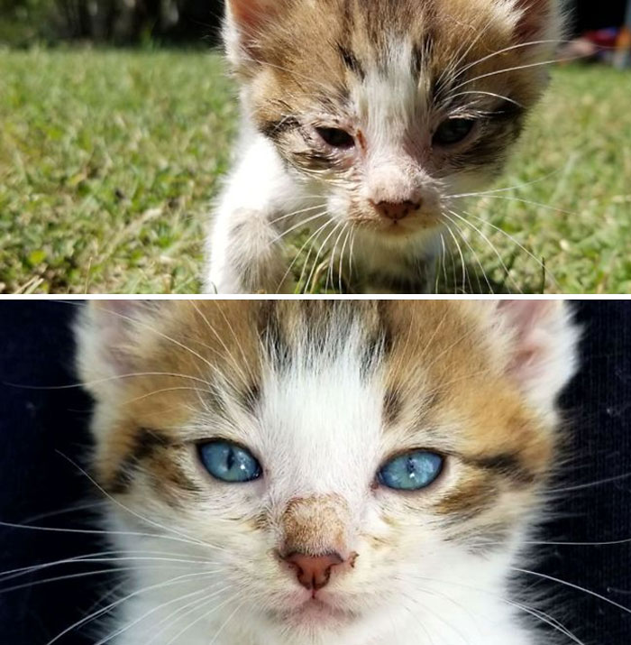 Adopted A Stray Abandoned Kitten, 5 Day Difference In His Eyes