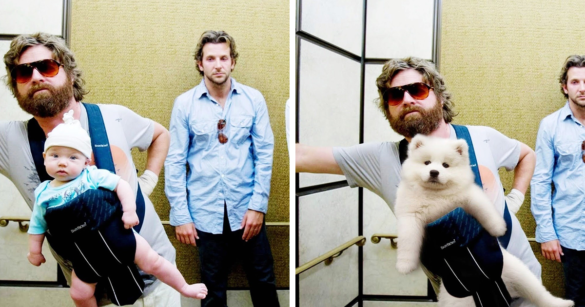 I Placed My Dogs Into Famous Movie Scenes With Photoshop (13 Pics)