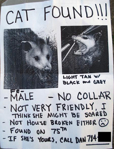 possum-kitty-5ebd312f510b2.jpg