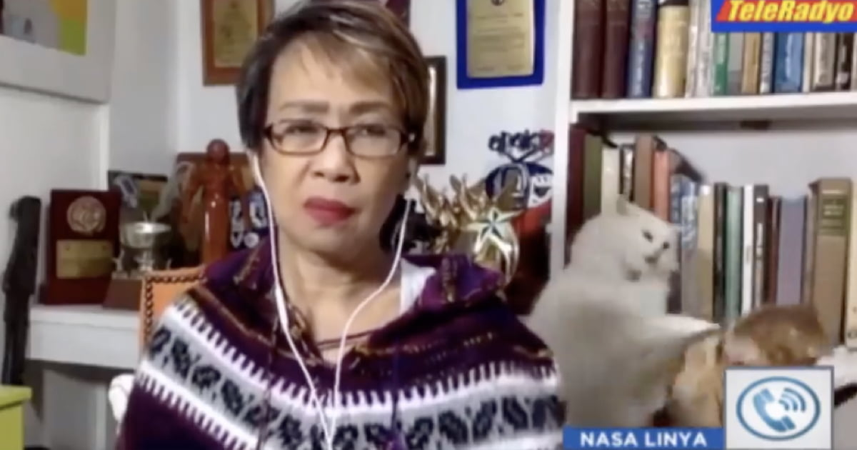 Reporter Tries To Stay Calm On Live TV While Her Cats Fight In The Background