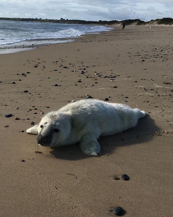 Rescued-Sea-Puppies-Seal-Rescue-Ireland