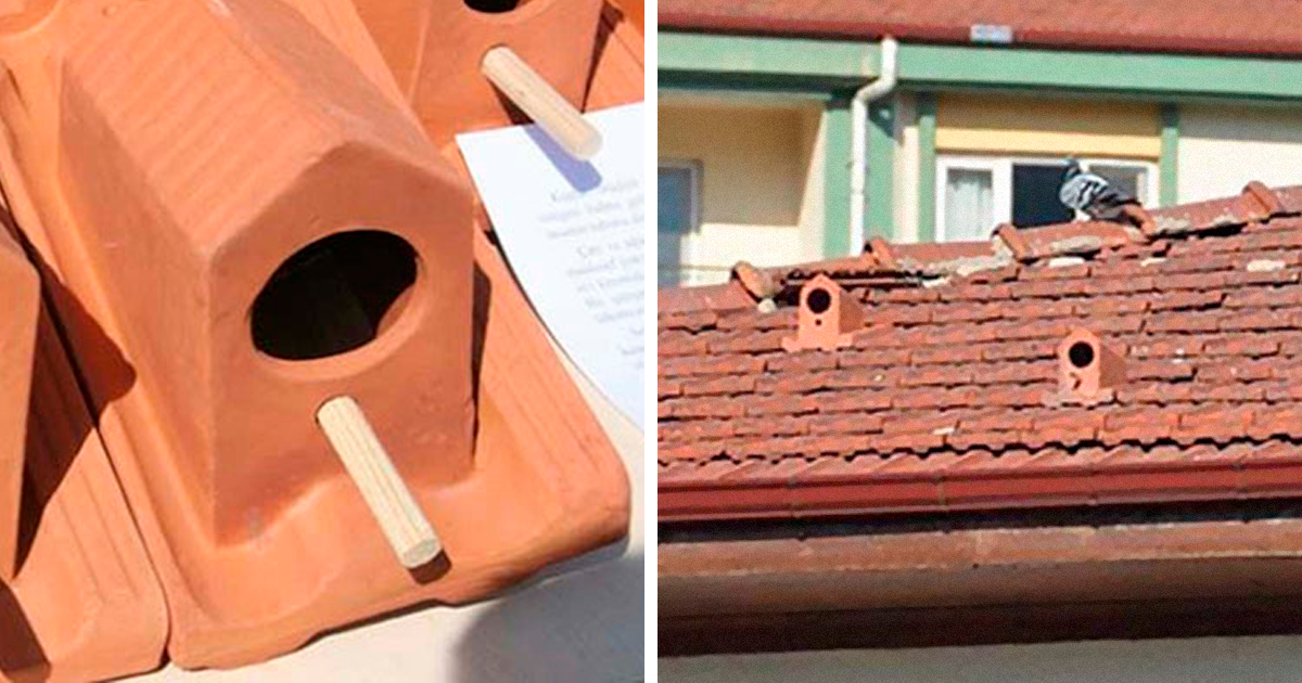 Turkish Company Is Manufacturing Roof Tiles That Double As Bird Nests