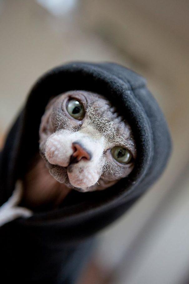 sphynx-cat-noel-hoody-5ec42b448ba07.jpg