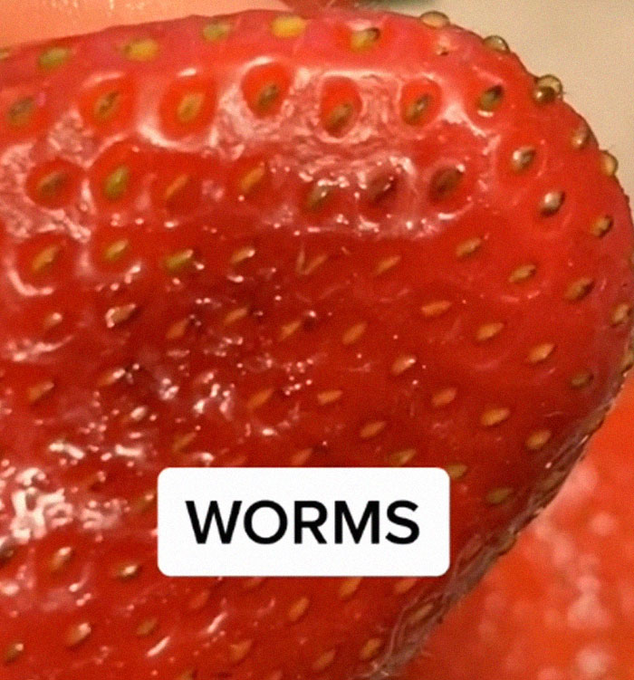 Apparently, If You Put Strawberries Into Salt Water, Tiny Bugs Come Out Of Them