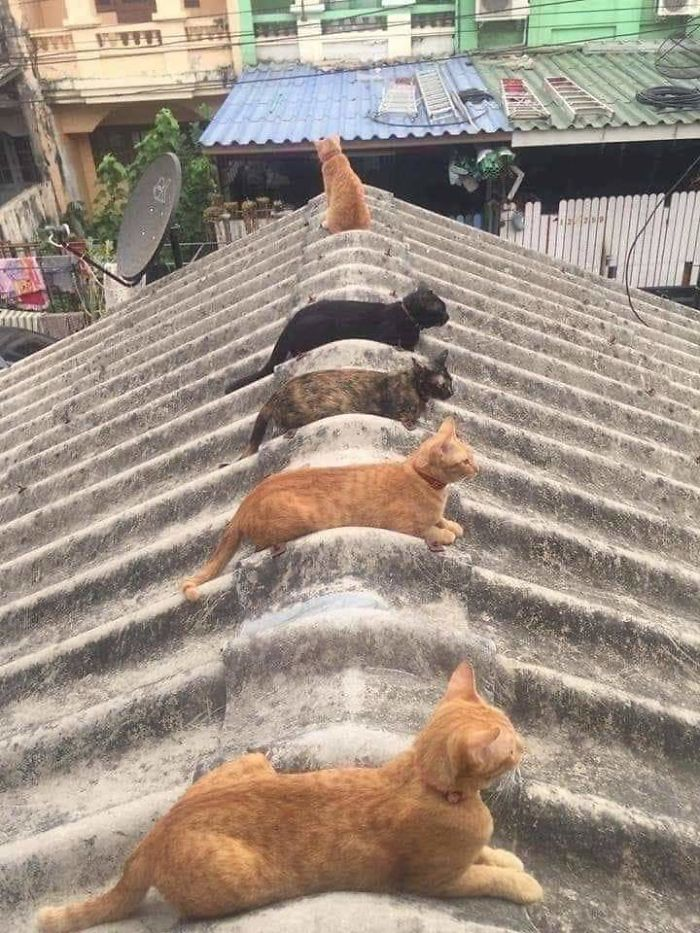 People In The Philippines Spotted Stray Cats Occupying The Circle Marks Near The Market
