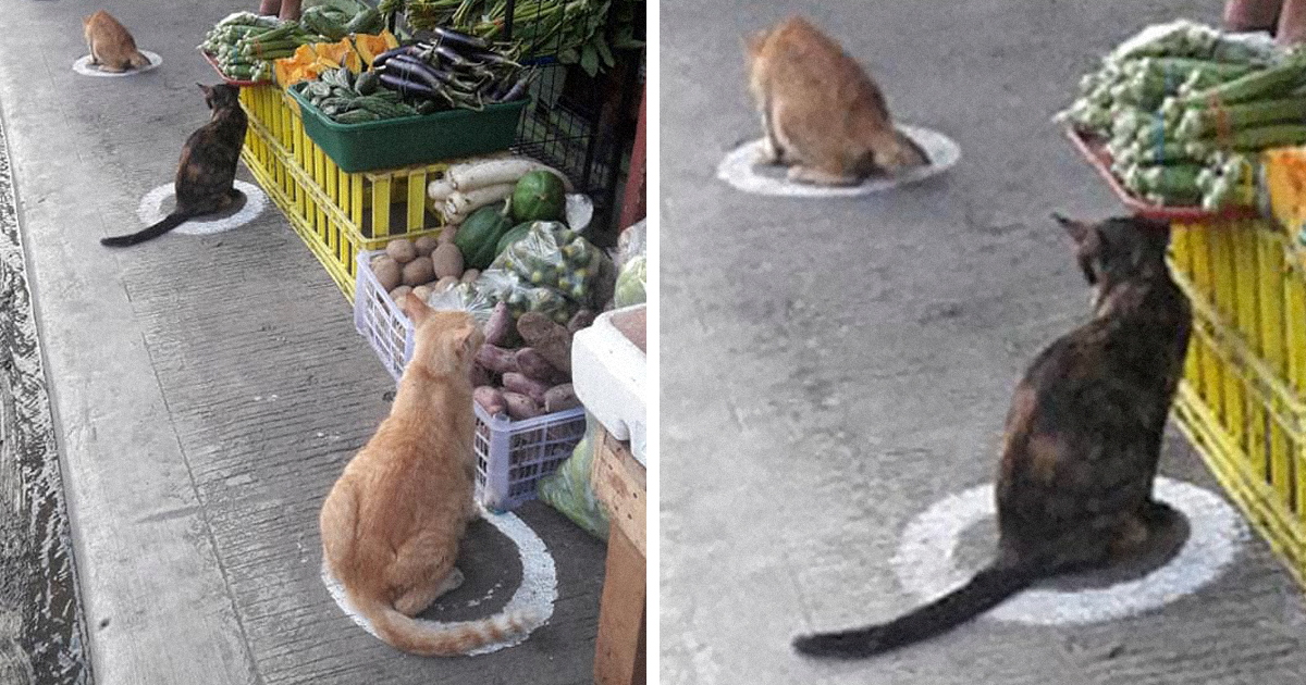 Stray Cats Occupying Social Distancing Circles In The Philippines Are A Great Example For Humans To Follow
