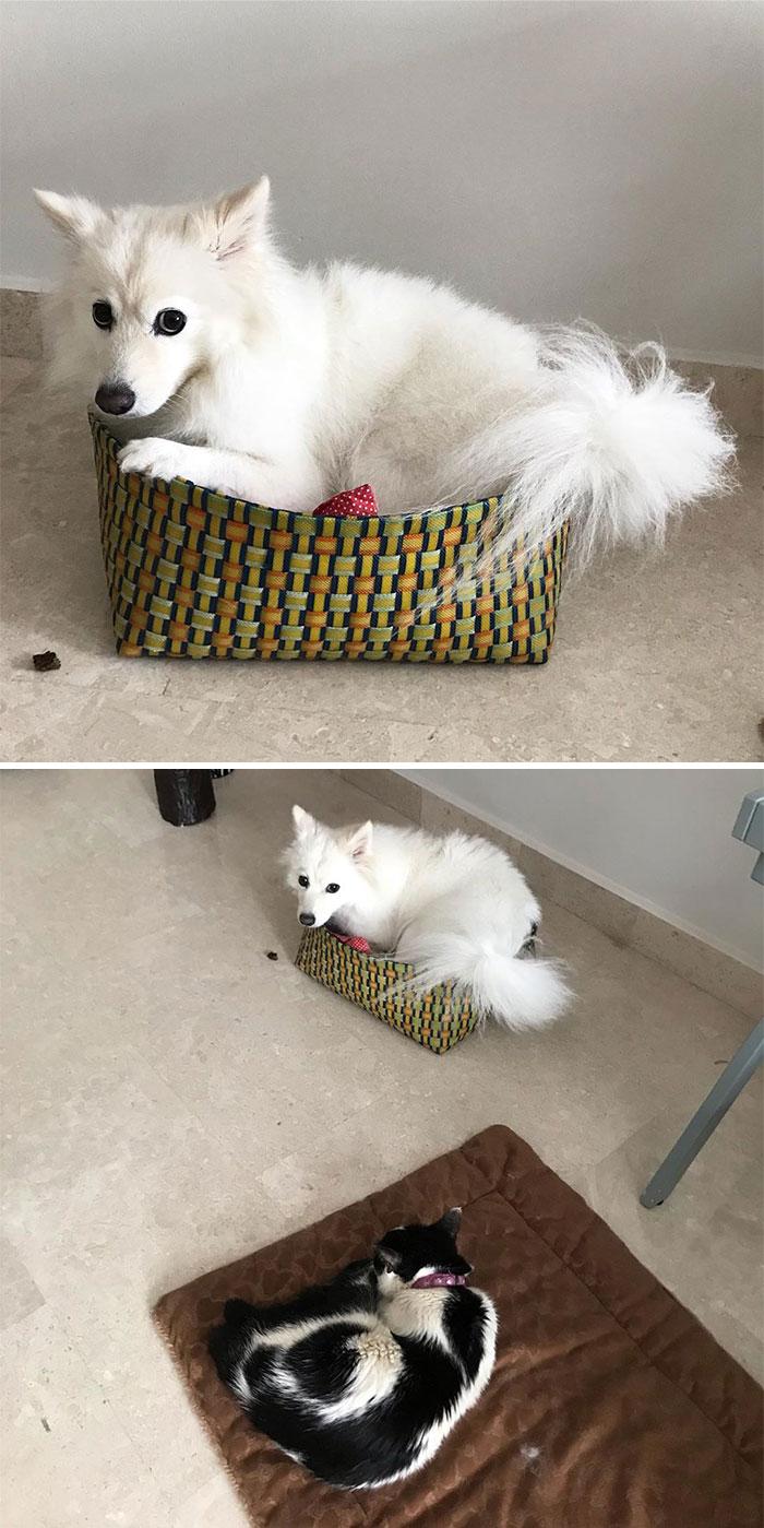 See Below Why Skye Is Looking Sad And Sleeping In Her Toy Basket Today