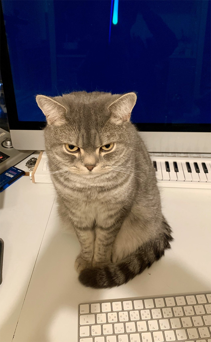 Man Trying To Work From Home Gets Constantly Interrupted By His Cat, Tricks It Into Being Calm By Placing A Box On His Desk
