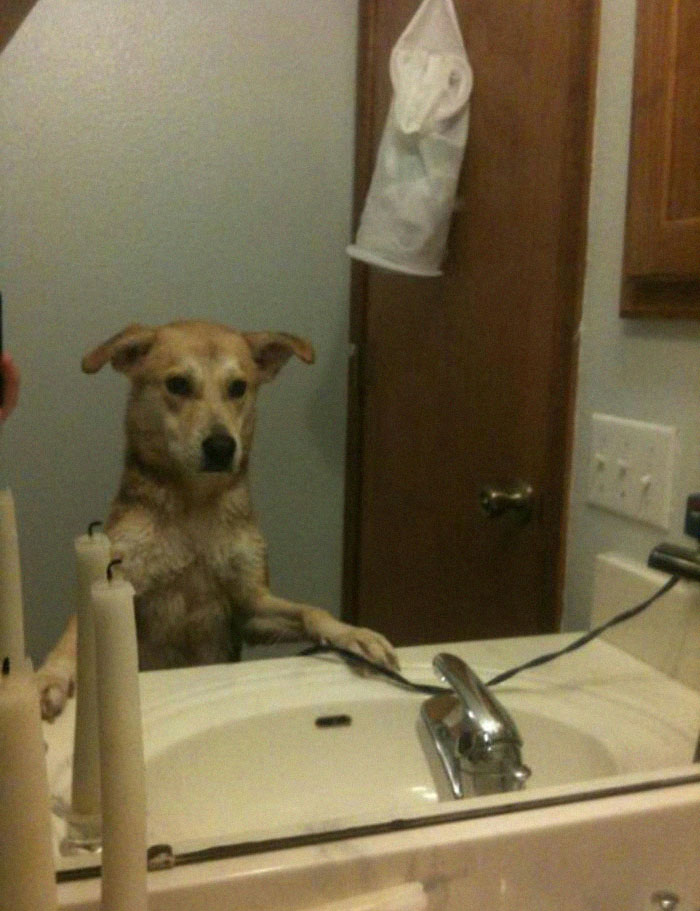 Happens After Ever Bath She Gets. She Goes To The Sink, Stands Up, Paws Down, And Looks At Herself In The Mirror.