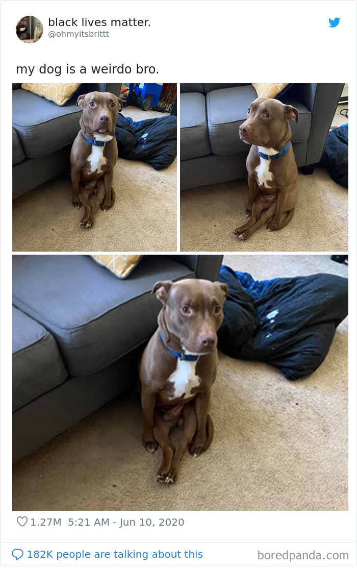 People Are Sharing Hilarious Pics Of Their Pets Sitting Like Total Weirdos In This Thread (30 Pics)