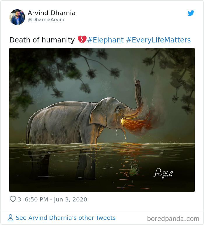 Pregnant-Elephant-Dies-Eats-Pineapple-Filled-With-Firecrackers-Artists-Pay-Tribute
