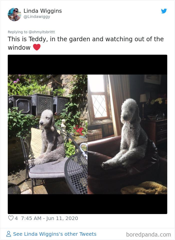 Werid-Sitting-Poses-Pets-Photo